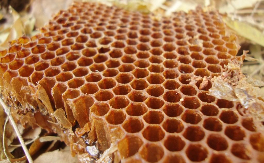 bijen honing