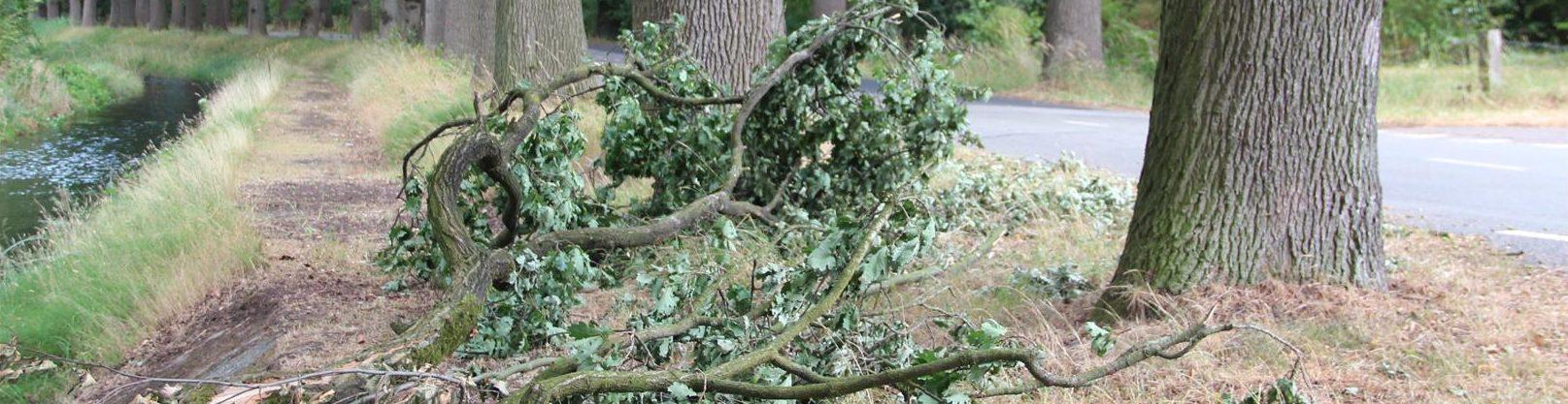bomen droogte 1 (Large)