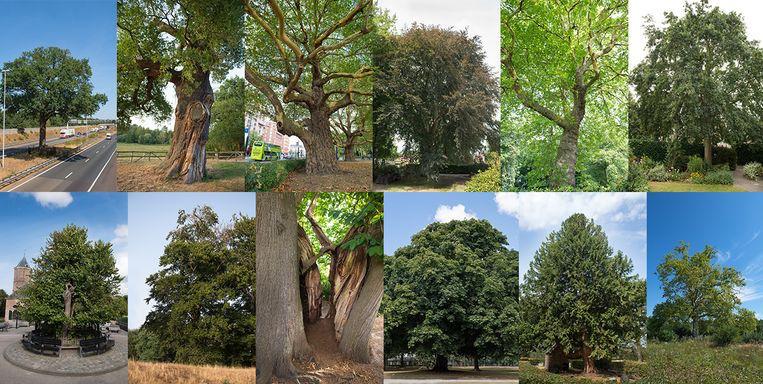 boom van het jaar 2018